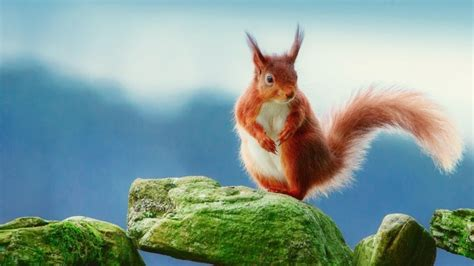 bing pictures as wallpaper squirrel brown squirrel on rocks hd wallpaper wallpaperfx