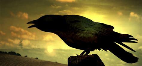wallpaper dark bird sl 225 inte birds of celtic myths and legend irish america