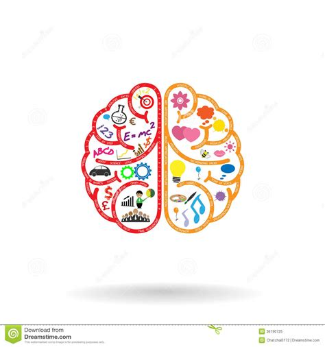 idea design art left brain and right brain symbol creativity sign stock
