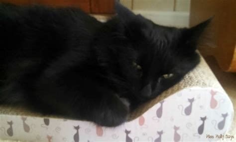 kitty couch kitty couch and cat scratcher all in one review miss