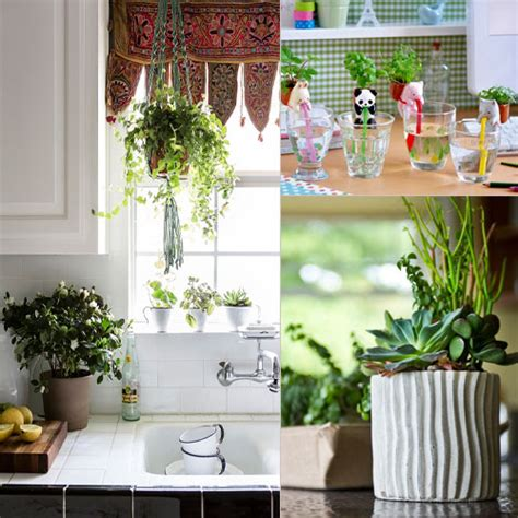 7 stylish ways to use indoor plants in your home s d 233 cor 7 tips freshen kitchen space with plants slide 1 ifairer com