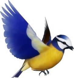 Colorful Bird Clipart clipart colorful bird