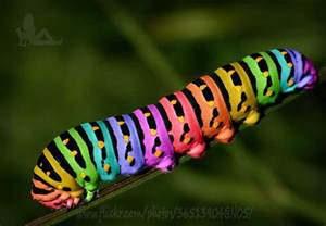 rainbow caterpillar photography and