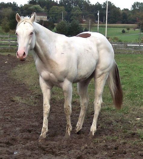 silver stallion mustang ok 946 best images about if wishes were horses on