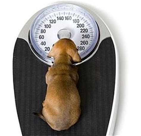 how much will my puppy weigh how much will my puppy weigh grown estimating size