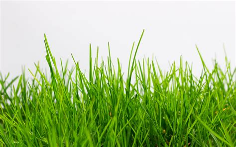 listing ownership whose grass is it anyways wav group consulting