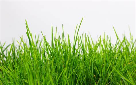 Grass Wallpaper Hd