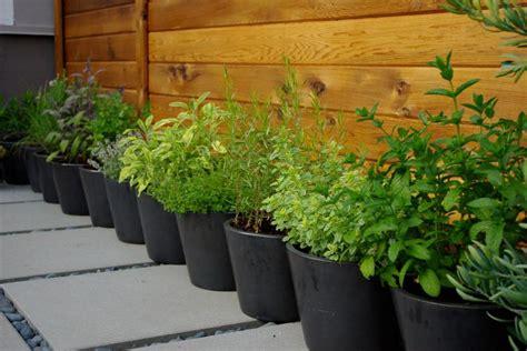 easy herb garden easy herb and vegetable garden designs hgtv
