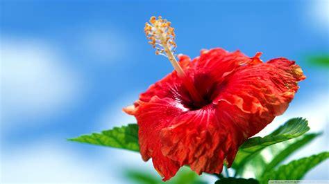 wallpaper bunga full hd poze desene de primavara related keywords poze desene de
