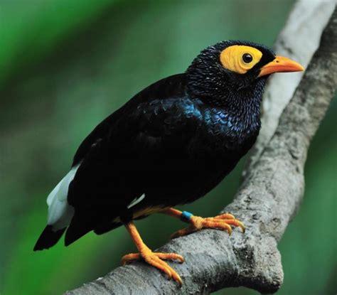 birds pictures pictures of bird