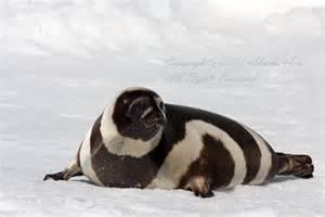 seal ribbon ribbon seal google 画像検索結果 www akashiarai co cs