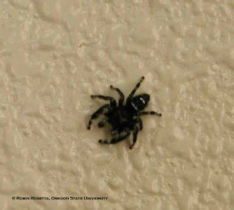 jumping house spiders i get that spiders are good and kill other bugs but how many is too many anandtech