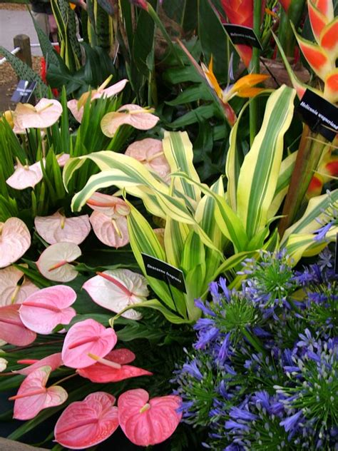 tropical flowers and plants chelsea flowers on show 2