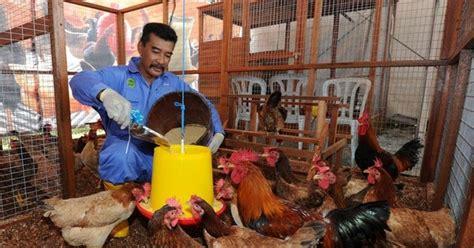 Keranjang Ayam Hidup penjual pembeli ayam daftar perusahaan pembeli dan