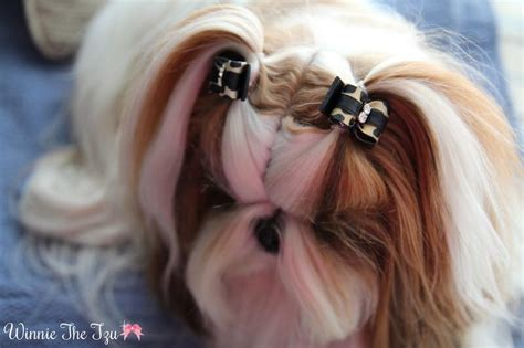 shitsu poodle with long hair 118 best dog and cat grooming images on pinterest dog