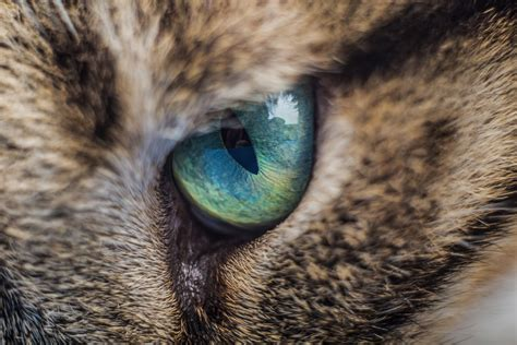 conjunctivitis treatment the counter cat conjunctivitis treatment the counter tips