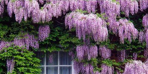 arbusto con fiori violacei 5 arbusti meravigliosi per il vostro giardino best5 it