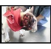 Dogs Bite Decatur Al PIT BULL ATTACK  ONE MORE VICTIM