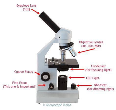 the compound microscope diagram microscope world september 2015