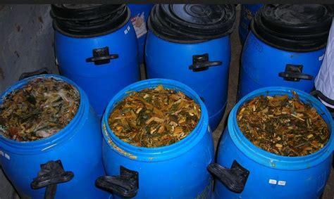 Fermentasi Pakan Ternak Alami cara membuat fermentasi pakan kambing ternak agar cepat