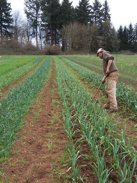 6zx6cxigcq7tjtue onion city res 8 flying onion farm localharvest