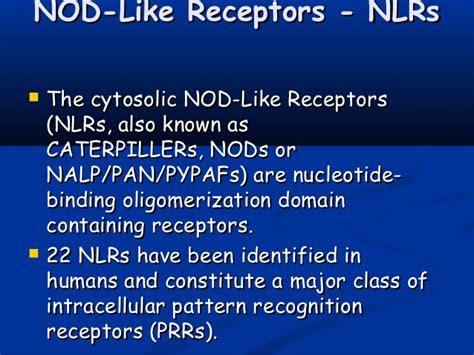 classes of pattern recognition receptors pathogen recognition
