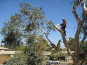 Tree Service In Tree Removal O Day