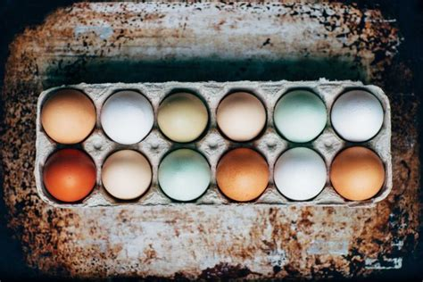 do chickens lay colored eggs hens that lay colored eggs the breeds of chickens will t