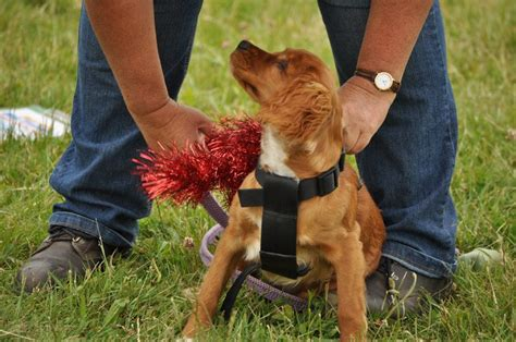 how to your tricks and obedience how often should i my puppy my puppy club