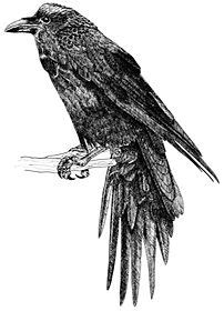crows don t sing the stables books 17 best images about it s a draw on feathers