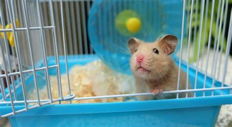 best bedding for hamsters best hamster bedding petlife safebed paper shaving small