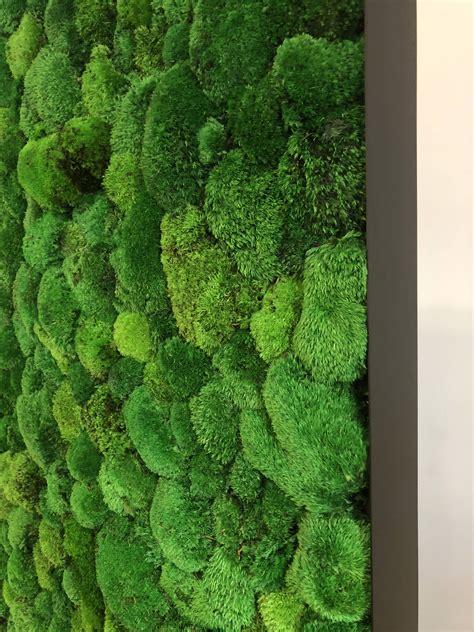 moss wall plantwalldesign vertical gardens technology