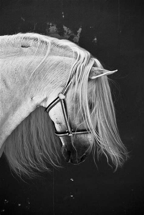 Ac 6275 Black 1000 bilder zu wei 223 e pferd auf spanisch