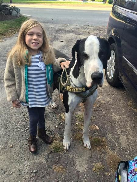 great dane service great dane service helps with disorder walk today