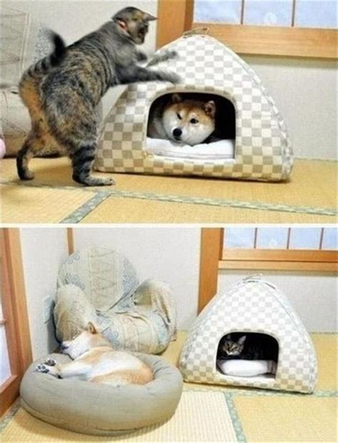 funny cat beds cats sleeps in dog bed dump a day