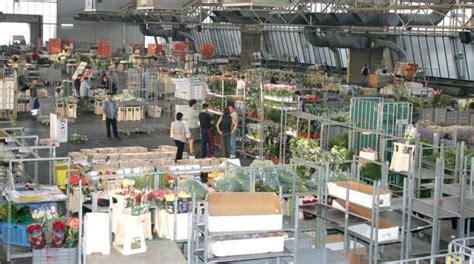 mercato dei fiori di pescia mercato dei fiori di pescia licenziati cinque dipendenti