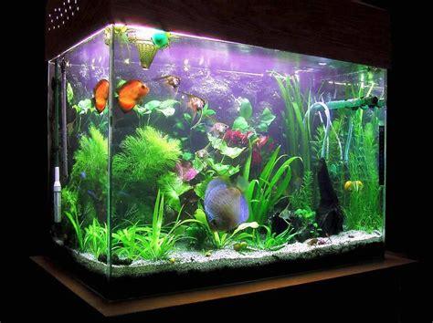 aquarium decor design decorating fish aquarium ideas aquarium design ideas