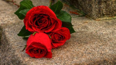 google wallpaper rose rose wallpapers hd szukaj w google flowers pinterest