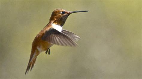 best 28 where hummingbirds live where hummingbirds