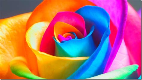 beautiful colours beautiful colours wallpapers wallpapersafari