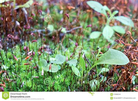 macro landscape stock photo image 57868244