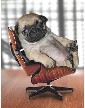 10 funny dog jokes dogsarethecoolest