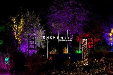 forest city lights visit this enchanted forest in southern california this winter