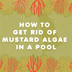 how to get rid of mustard algae in a pool