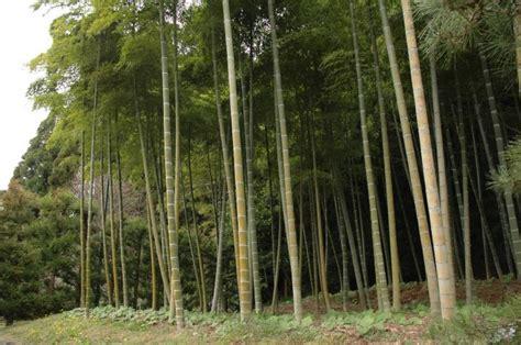giardini mondo saihoji 187 kyoto 187 giappone giardini mondo