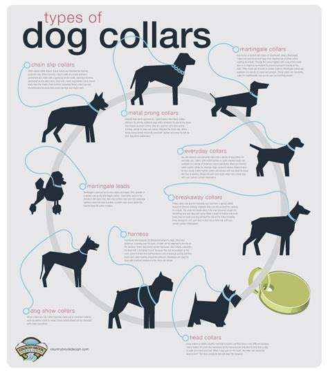 doge type of types of collars breeds picture