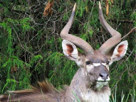 endemic wild animals  ethiopia tours