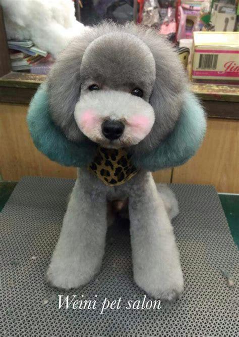 corte pelo caniche poodle shop ideas cortes caniche