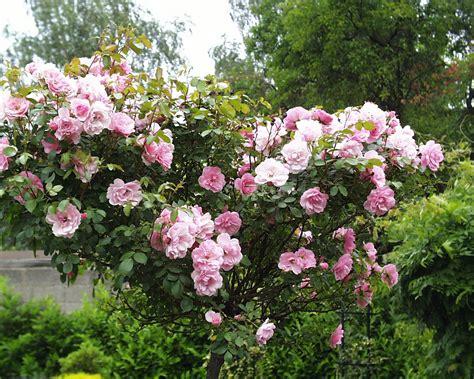 Naturnahe Gartengestaltung by Naturnahe Gartengestaltung Jamgo Co