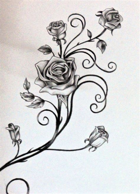 rose tattoos stomach drawings of vines and leaves roses and the vine by